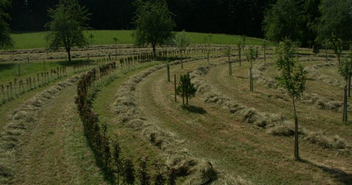 Baumkreis im Sommer