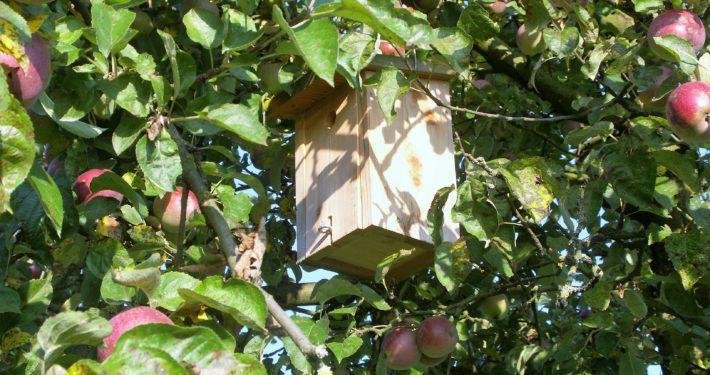 Vogelhaus auf einem Apfelbaum