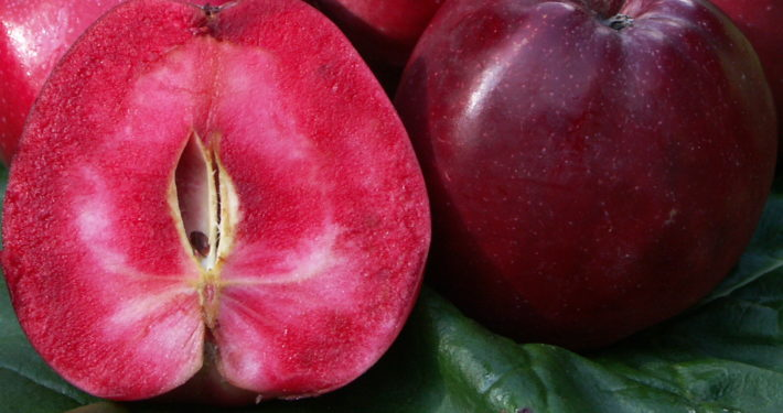 Querschnitt eines roten Apfels